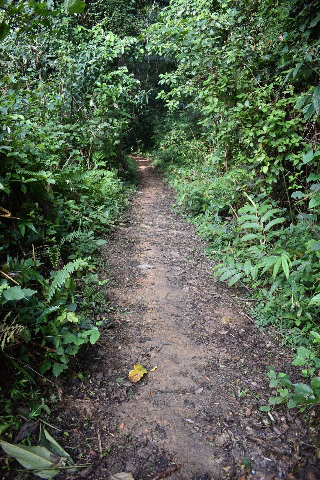 gabon jungle path
